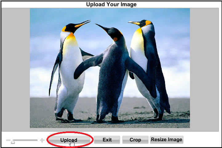 Upload an image